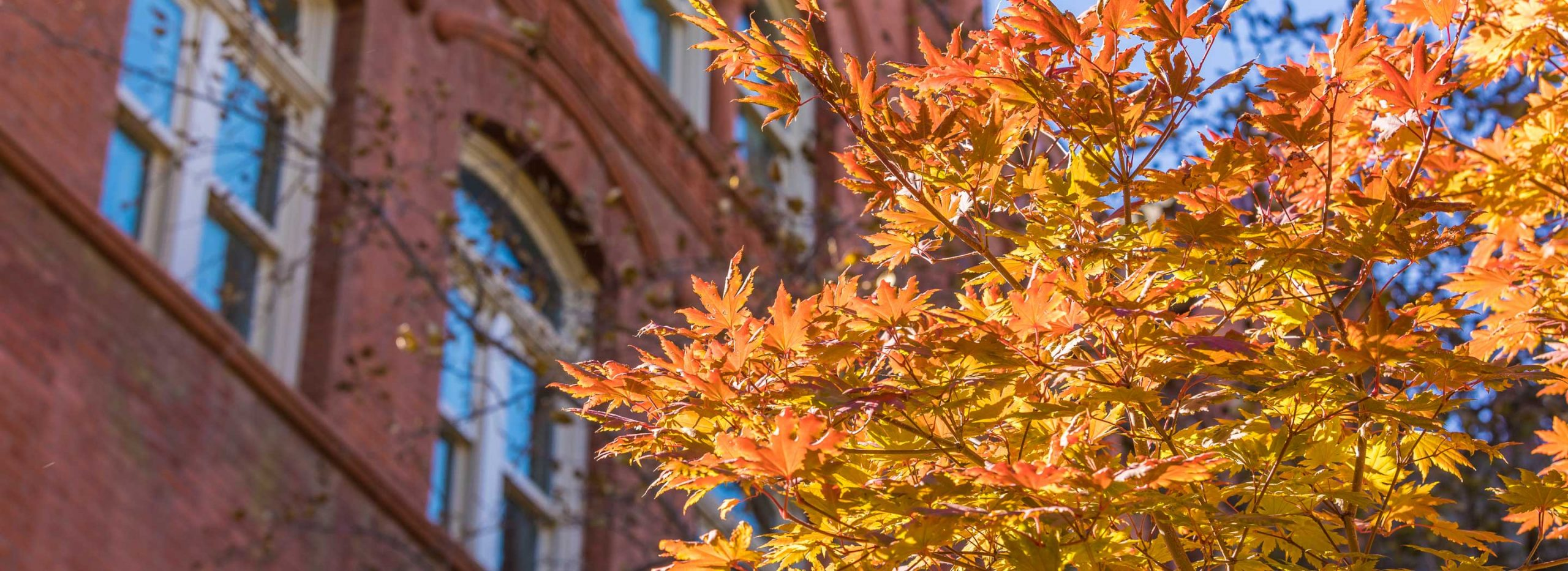 Old Main hall with a tree in front of it in autumn.
