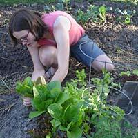 Photo of a student working in a garden