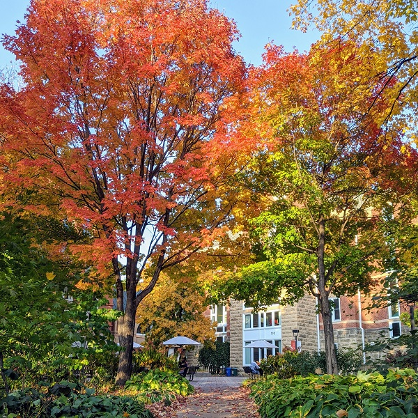 Fall at Macalester