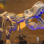 Fossilised Dinosaur