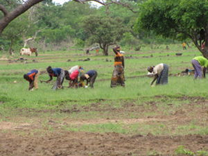 Female farmers in Burkina Faso.