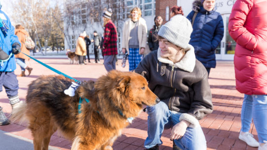 image of dogs getting petted on Bateman Plaza