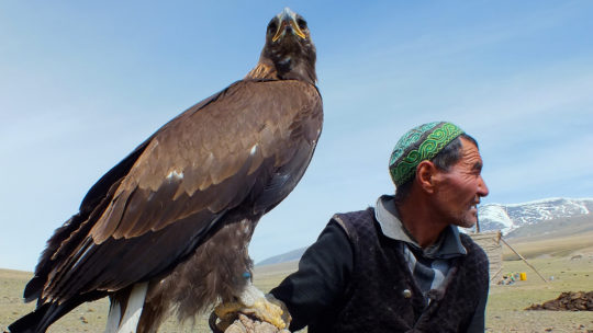 image of a Mongolian Eagle