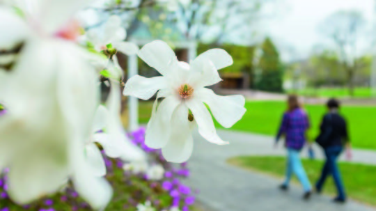 image of spring flower