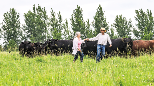 Photo of Audrey Arner '73 and Richard Handeen '73 dancing in a field surrounded by cows.