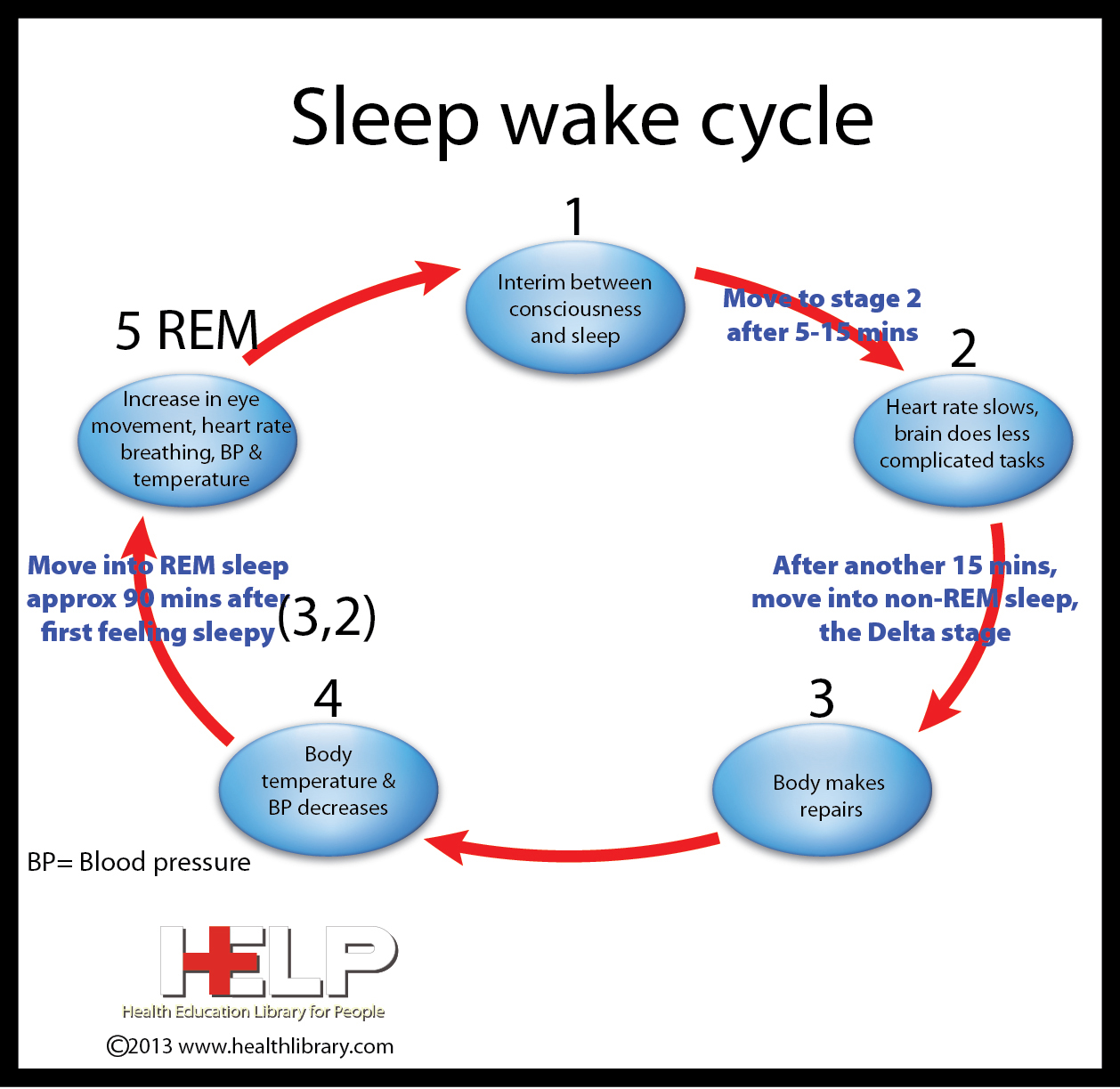 1998 as cited in sleep deprivation were going into rem sleep in an average of only 34 minutes which is similar to patients with narcolepsy