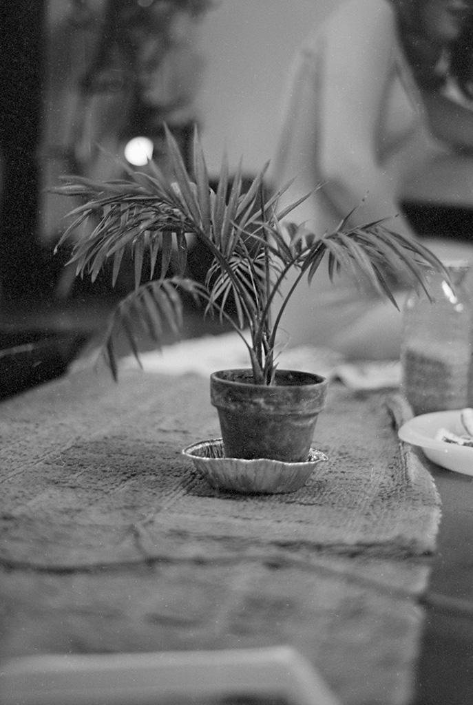A palm tree on the beach