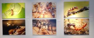 Ants: Alien Civilizations Among Us by Alexander Wild