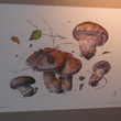 Mushrooms of St. Petersburg