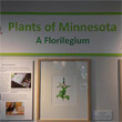 Plants of Minnesota