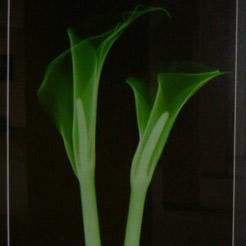 xray of plant life
