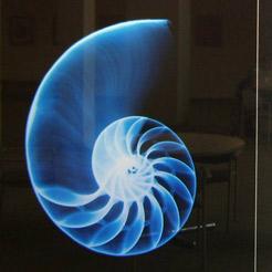 xray of marine life
