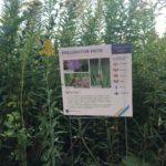 Pollinator Path Sign